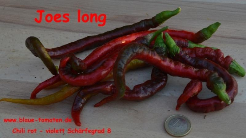 Joes long - sehr langer, roter Chili