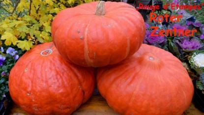 Roter Zentner, Saatgut, Tomaten, Samen, Gemüse, Kalebassen ...