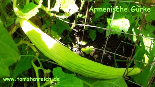 Leaf green good rod
